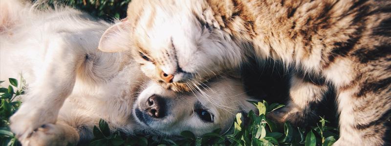 Austin Pet Sitters