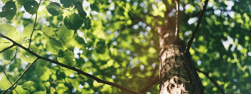 Residential Tree Permit Process Austin