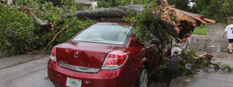 Tree Removal Austin