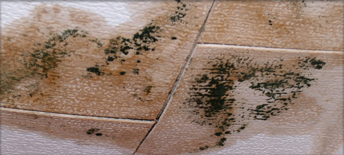 Roof Leaks and Mold: How Slow Water Damage Can Build Up