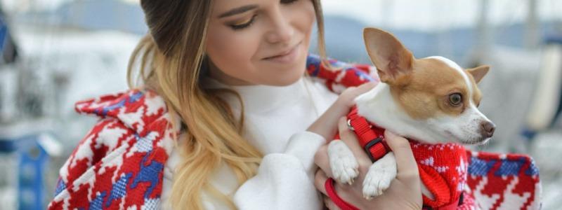 Dog Groomer Austin