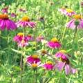 Lady Bird Johnson Wildflower Center - Austin Texas